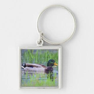 Male mallard duck floating on the water keychain