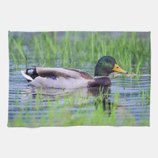 Male mallard duck floating on the water kitchen towel