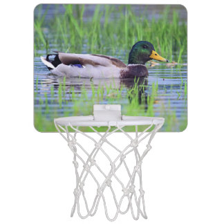 Male mallard duck floating on the water mini basketball hoop