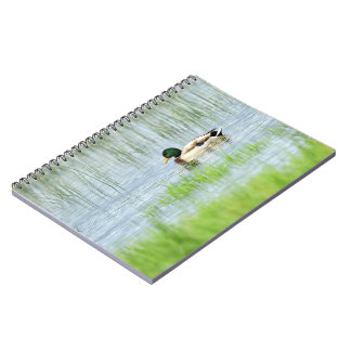 Male mallard duck floating on the water notebook