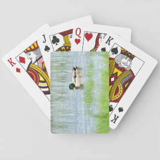 Male mallard duck floating on the water playing cards