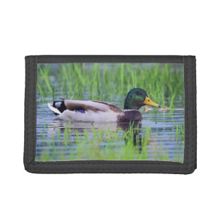 Male mallard duck floating on the water tri-fold wallet