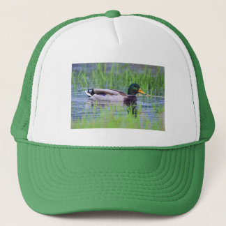 Male mallard duck floating on the water trucker hat