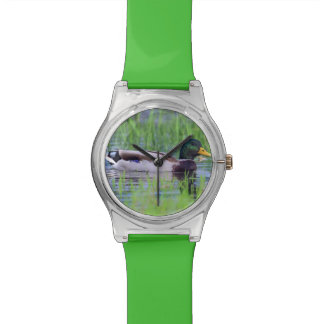 Male mallard duck floating on the water wristwatches