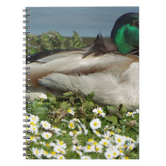 Male Mallard Duck Spiral Notebooks