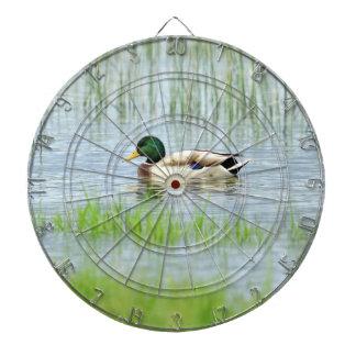 Male mallard or wild duck, anas platyrhynchos dartboard
