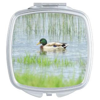 Male mallard or wild duck, anas platyrhynchos makeup mirrors