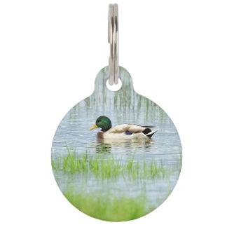 Male mallard or wild duck, anas platyrhynchos pet ID tag