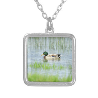 Male mallard or wild duck, anas platyrhynchos silver plated necklace