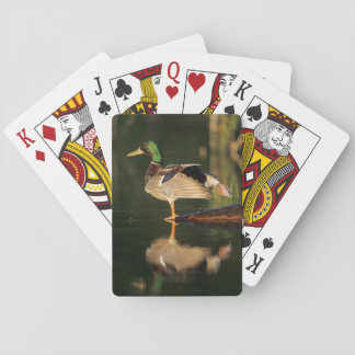 Male mallard stretching, Illinois Playing Cards