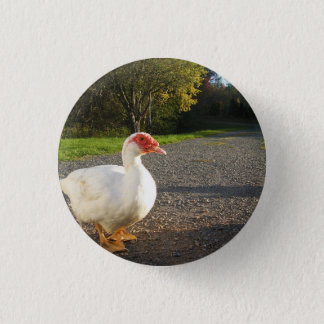 Male Muscovy Duck Button