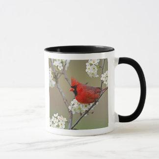Male Northern Cardinal among pear tree Mug
