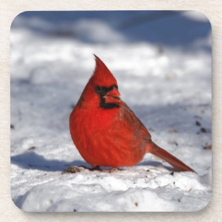 Male Northern Cardinal in the Snow Coaster