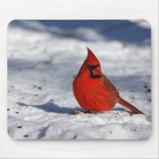 Male Northern Cardinal in the Snow Mouse Pad