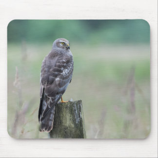 Male Northern Harrier Mouse Pad