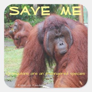 Male Orangutan Borneo Animals Square Sticker