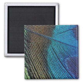 Male peacock feather detail square magnet