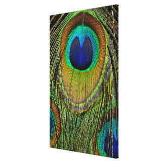 Male peacock tail feathers canvas print