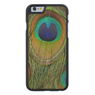 Male peacock tail feathers carved maple iPhone 6 case