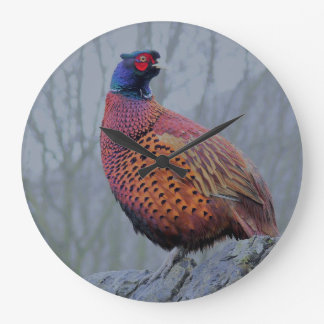 Male pheasant. large clock
