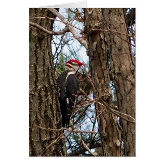 Male Pileated Woodpecker Card