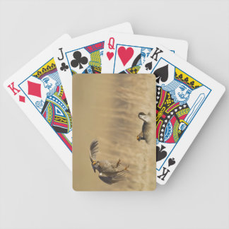 Male prairie chickens at lek in Loup County Bicycle Playing Cards