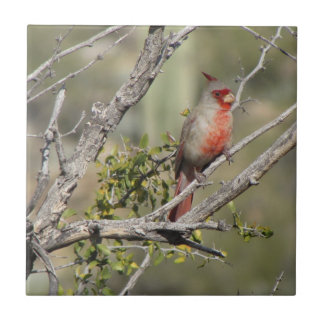 Male Pyrrhuloxia Tile