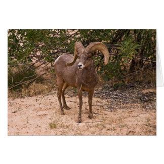 Male Ram Big Horn Sheep Card
