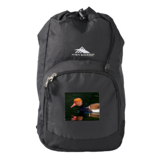 Male red-crested pochard, netta rufina, duck backpack