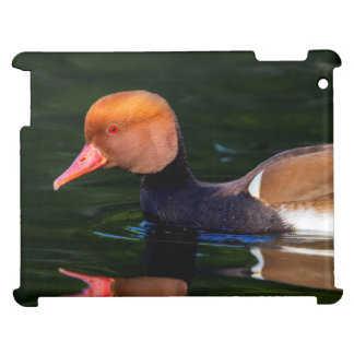 Male red-crested pochard, netta rufina, duck case for the iPad 2 3 4