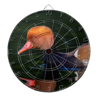 Male red-crested pochard, netta rufina, duck dartboard