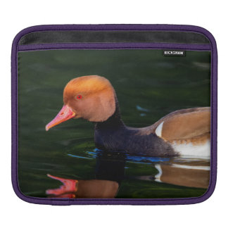 Male red-crested pochard, netta rufina, duck iPad sleeve