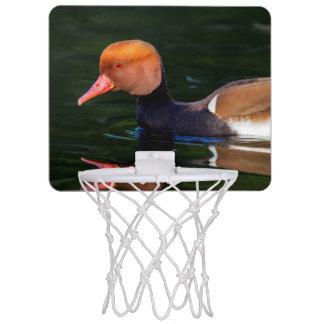 Male red-crested pochard, netta rufina, duck mini basketball hoop
