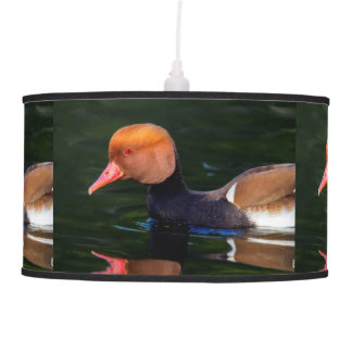 Male red-crested pochard, netta rufina, duck pendant lamp