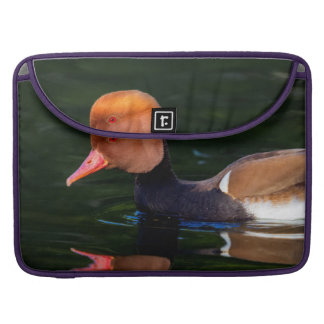 Male red-crested pochard, netta rufina, duck sleeves for MacBooks
