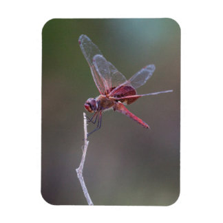 Male red saddlebags magnet