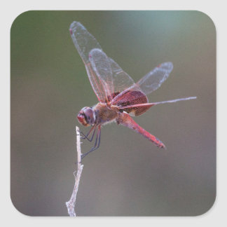 Male red saddlebags square sticker