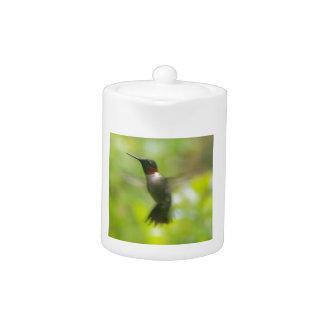 Male Ruby Throat Hummingbird