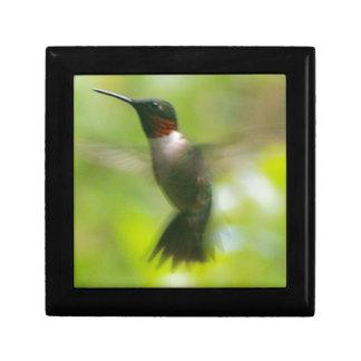 Male Ruby Throat Hummingbird Gift Box