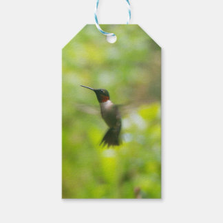 Male Ruby Throat Hummingbird gift tag Pack Of Gift Tags
