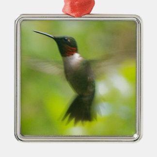 Male Ruby Throat Hummingbird Metal Ornament