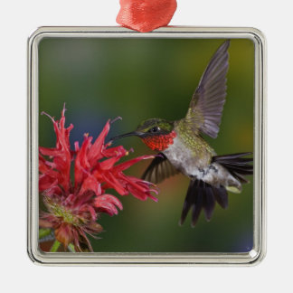 Male Ruby-throated Hummingbird feeding on Silver-Colored Square Ornament