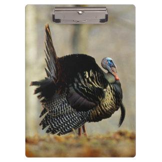 Male turkey strutting, Illinois Clipboard