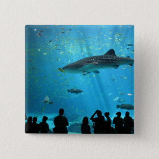 Male Whale Shark 2 Inch Square Button