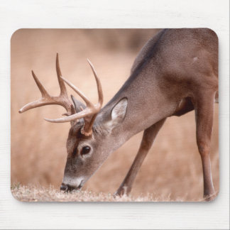 Male whitetail deer grazing mouse pad