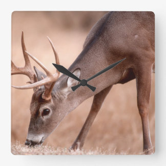 Male whitetail deer grazing square wall clock