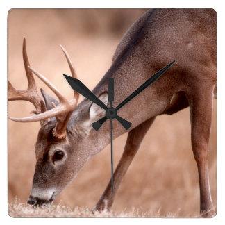 Male whitetail deer grazing wall clock