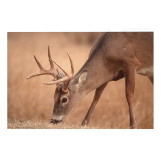 Male whitetail deer grazing wood wall art