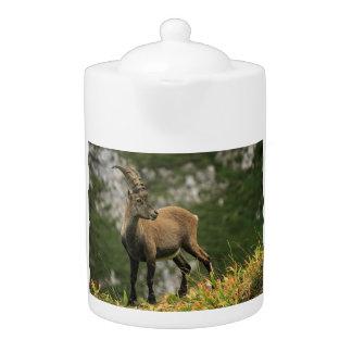 Male wild alpine, capra ibex, or steinbock