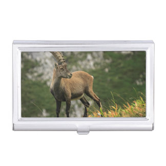 Male wild alpine, capra ibex, or steinbock business card holder